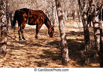 秋, 暗い, 馬