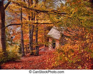 秋, 森, -, キャビン, 風景
