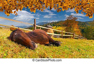秋, 馬, 牧草地, 睡眠