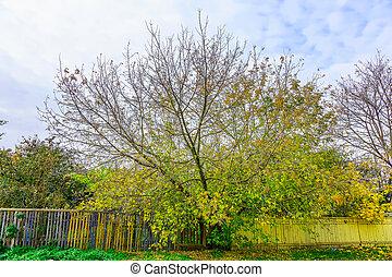秋, branchy, 木, フェンス, カラフルである