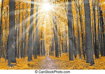 秋, nature., 森林