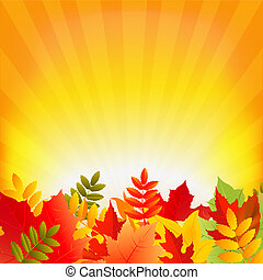 秋, sunburst, 背景