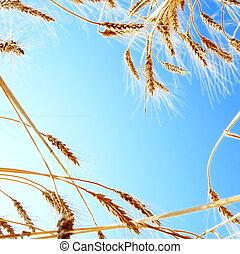 空, フレーム, 小麦, ゆとり, に対して
