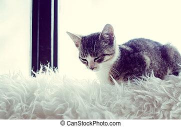 窓, 猫の世話