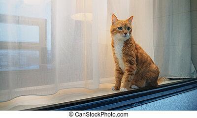 窓, 猫の世話, 赤