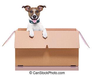 箱, 犬, 引っ越し