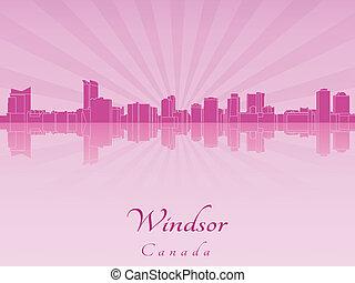 紫色, 放射, 蘭, スカイライン, windsor