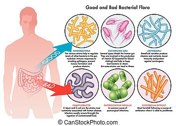 細菌, 植物相, 腸