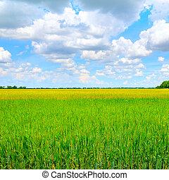 緑の小麦, 青, フィールド, sky.