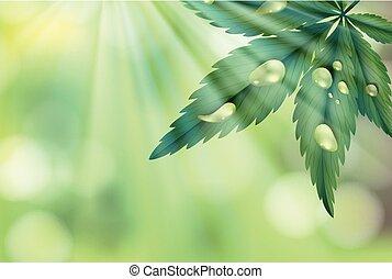 緑の葉, 自然, 背景