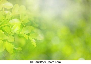 緑, バックグラウンド。, 自然, 柔らかい 焦点
