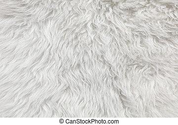 羊毛, 細部, sheep, バックグラウンド。, 毛皮
