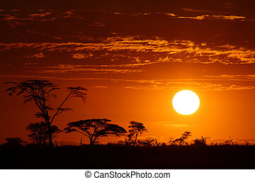 美しい, アフリカ, 日没, サファリ