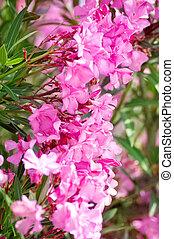 美しい, ピンクの花, 公園
