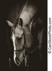 美しい, 低いキー, スタイル, 馬, 肖像画