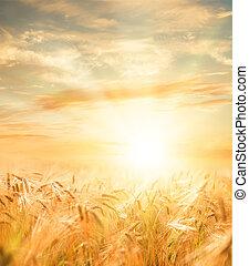 美しい, 小麦, field.