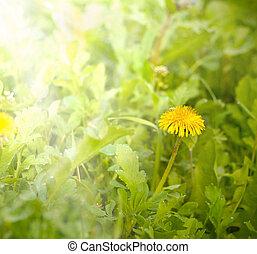 美しい, 春の花, 芸術, 背景