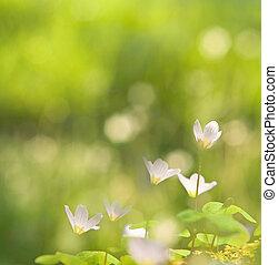 美しい, 春, 緑の背景, ぼんやりさせられた