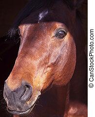 美しい, 暗い, 馬, 肖像画