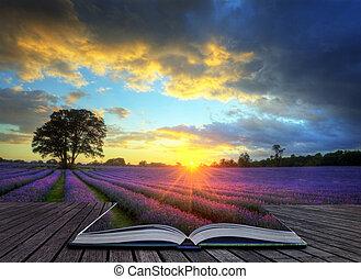 美しい, 概念, 大気, 熟した, 活気に満ちた, 田舎, フィールド, イメージ, 空, ラベンダー, 創造的, 気絶, 日没, 英語, 雲, 上に, 風景