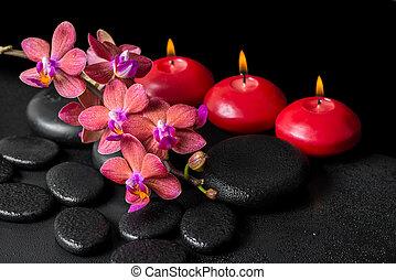 美しい, 概念, 花, 蝋燭, エステ, 禅, 玄武岩, phalaenopsis, 水, クローズアップ, 咲く, 小枝, 石, 低下, 赤, 蘭
