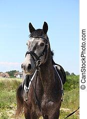 美しい, 灰色, 馬, 暗い, 肖像画, スポーツ