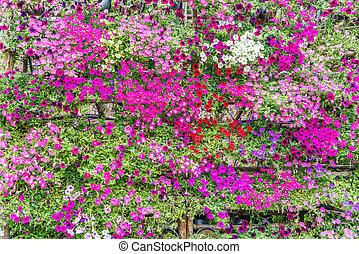 美しい, 花, 背景