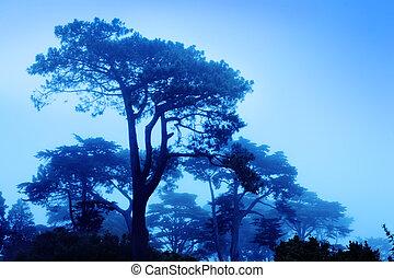 美しい, 霧が濃い, 木, 朝