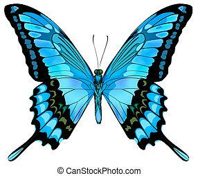 美しい, 青, ベクトル, 蝶, 隔離された