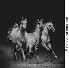 美しい, 馬, アラビア人, 暗い
