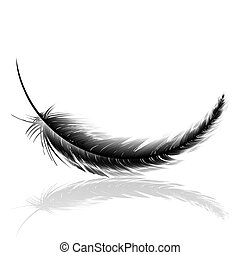 羽, 黒, デリケートである, 影