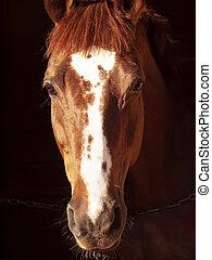 肖像画, 暗い, 馬, カタバミ
