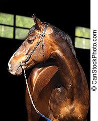 肖像画, 暗い, 馬