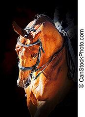 肖像画, 馬, スポーツ, dressage