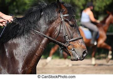 肖像画, 馬, 添え金, 湾