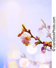 背景, 芸術, 花, 春, ピンク