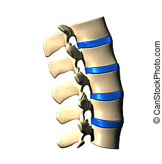 脊柱, 腰の, -, サイド光景