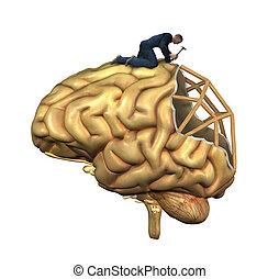 脳, 再建