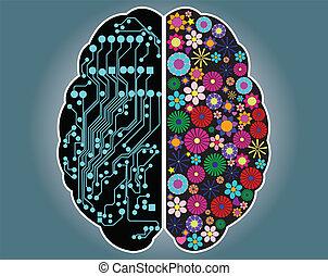 脳, 権利, 側, 左