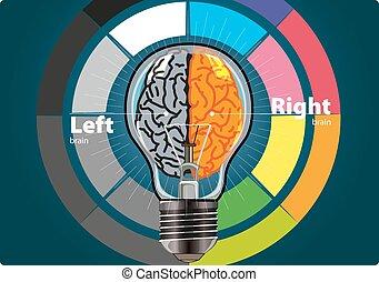脳, 権利, 左