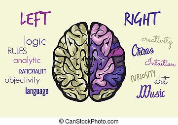 脳, 機能