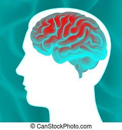 脳, 白熱, 人間