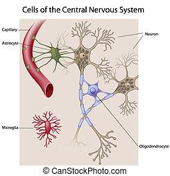 脳, 細胞
