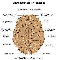 脳, eps8, 機能