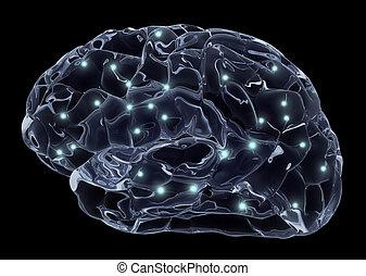 脳, neurons, 人間