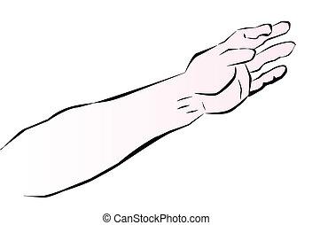 腕, 人間