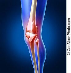 膝, 痛み, 人間
