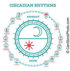 航跡, さらされること, infographic, rhythm., cycle., 睡眠, ホルモン, 日光, 案, production., ∥統制する∥, circadian, elements.
