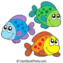 色, かわいい, 魚