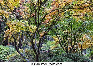 色, 秋, 日本の庭